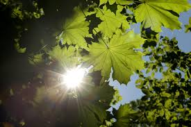 Plants That Do Not Need Much Sunlight by Learn About Photosynthesis Formula