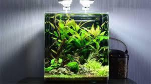 10 gallon planted tank led lighting best fish for a 10 gallon aquarium the aquarium guide