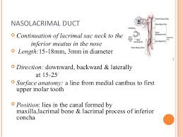 Eye Ducts Anatomy Anatomy And Physiology Of Lacrimal System