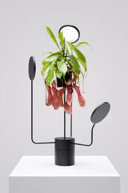 Plants That Need Low Light by Alien Like Planter Lights From Goula Figuera Studio Design Milk