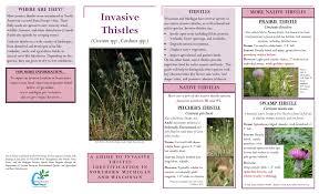 native plant network thistles northwest michigan invasive species network