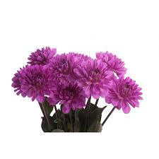 purple dahlia flower dahlias types of flowers flower muse