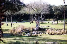 10 great reasons to stay at disney u0027s animal kingdom lodge u2014 all