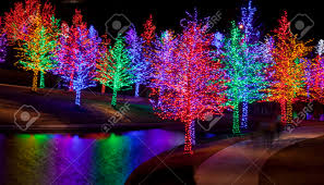 trees tightly wrapped in led lights for the christmas holidays