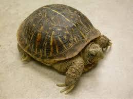 turtles box feeding vca animal hospital