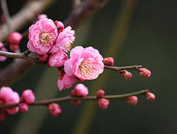 spring favorites flowering trees bayer advanced