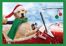 golden retriever christmas cards last box available u2013 the inky paw
