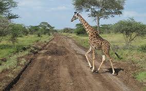 best safaris and guided tours of africa travlgusto