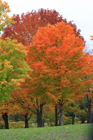 33 best fall colors images on pinterest traverse city traverse