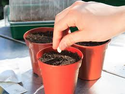 how to plant seeds in small pots gardening in pots hgtv