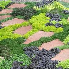perfect plants for rock wall landscapes sunshine butterfly and