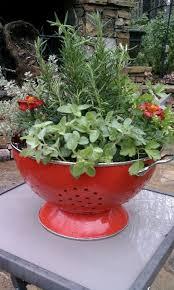 Different Garden Ideas Colander Container Garden Great Idea To Plant A Bowl Garden With