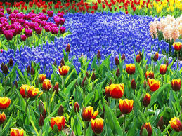 image of best flower garden ideas for beginners container