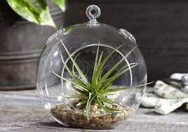 hanging glass terrarium globes for air plants u0026 succulents 6 pack