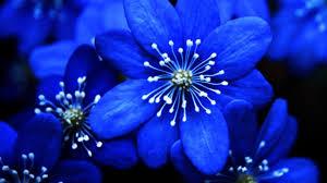 blue flower blue flowers as decors for weddings frett board