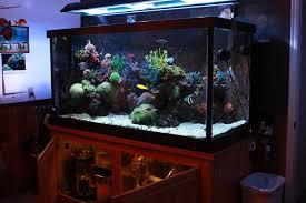 stunner led aquarium light strips feature aquarium the 335 gallon
