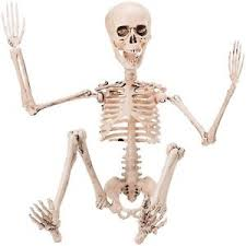 poseable skeleton posable skeleton ebay