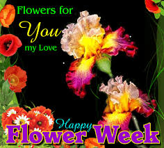 flowers for my flowers for you my free flower week ecards greeting cards