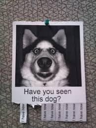 Lost Dog Meme - list of synonyms and antonyms of the word lost dog funny