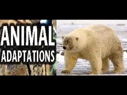 animal adaptations for kids lesson with quiz youtube