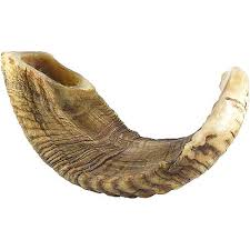 shofar rams horn image result for picture of a shofar ram s horn my project