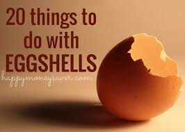 ground eggshells 20 things to do with eggshells happy money saver