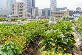 the best tips for starting a small urban garden naturalcave