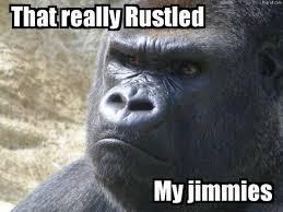 Gorilla Memes - gorilla memes and funny gorilla pictures pigroll com