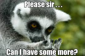 Lemur Meme - itt nature s meme potentials lemurs bodybuilding com forums