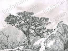 drawing rocks pencil google search how to draw realistic trees