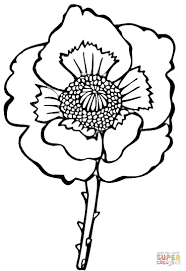 flower poppy coloring page free printable coloring pages