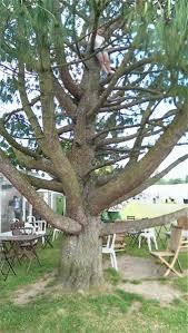 the contemporary craft festival tree fall