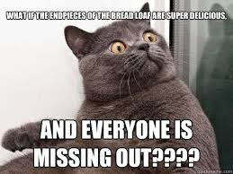Missing Cat Meme - fancy missing cat meme 301 moved permanently 80 skiparty wallpaper