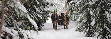 Price Of Rides At Winter Whistler Bc Canada Winter Sleigh Rides Tourism Whistler