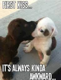 Cute Memes - first kiss cute puppy meme