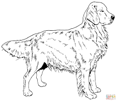 golden retriever dog coloring page free printable coloring pages