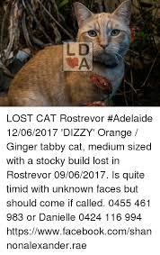 Lost Cat Meme - ld da lost cat rostrevor adelaide 12062017 dizzy orange ginger