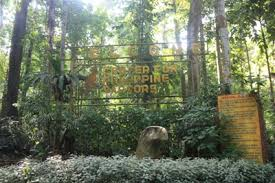 Up Los Banos Botanical Garden by Laguna Travel Guide Center For Philippine Raptors