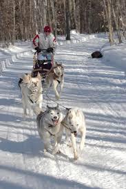 28 best dog sledding images on pinterest sled guide dog and