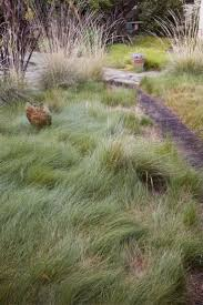 native northern california plants best 25 california native garden ideas on pinterest california