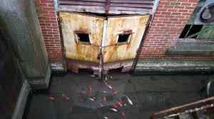 koi swimming in an abandoned philadelphia basement x post r