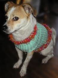 loom knitting patterns for dog sweaters thriftyfun