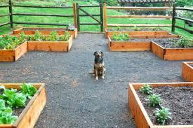 vegetable garden earth mama landscape design