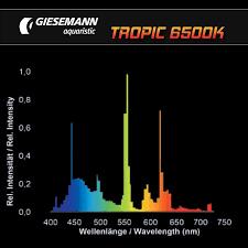 giesemann tropic 6500k t5 lamps