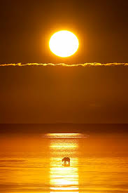 the in the sun by lissick cook inlet
