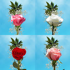 filler flowers single assorted color roses filler flowers for s day