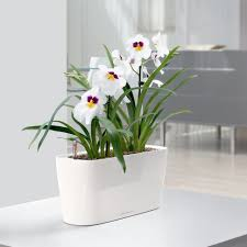 modern plant pots polypropylene classico selfwatering decorations lechuza