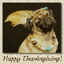 doggonegreetings ecards for thanksgiving pug