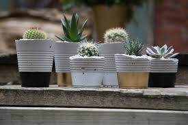 concrete planter ideas to get the contemporary look in your home