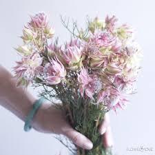 protea flower blushing protea flower moxie
